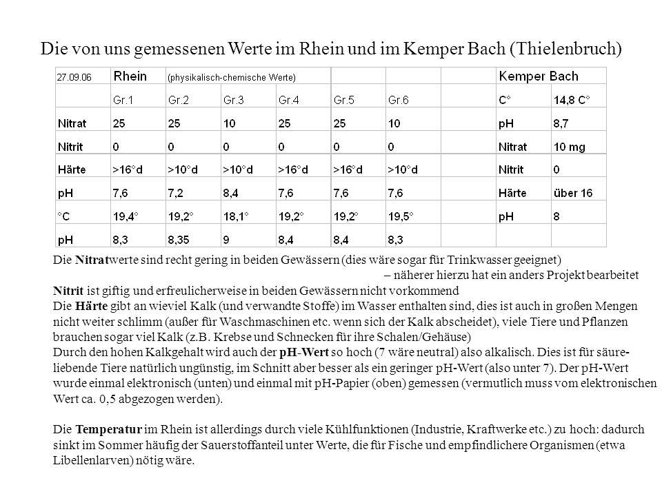 Die von uns gemessenen Werte im Rhein und im Kemper Bach (Thielenbruch)