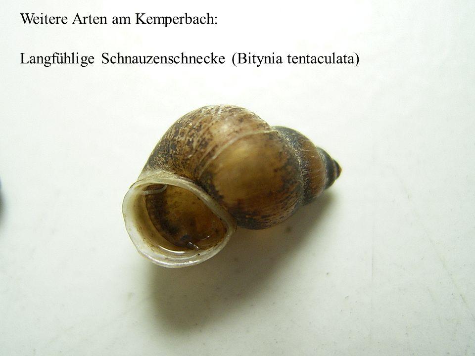 Weitere Arten am Kemperbach: