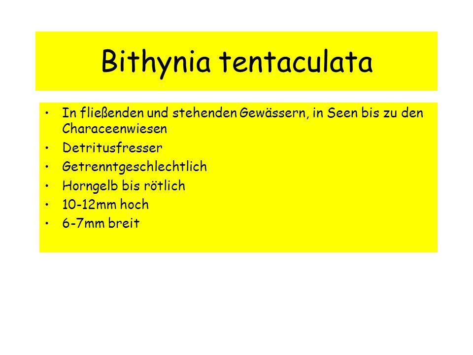 Bithynia tentaculata In fließenden und stehenden Gewässern, in Seen bis zu den Characeenwiesen. Detritusfresser.