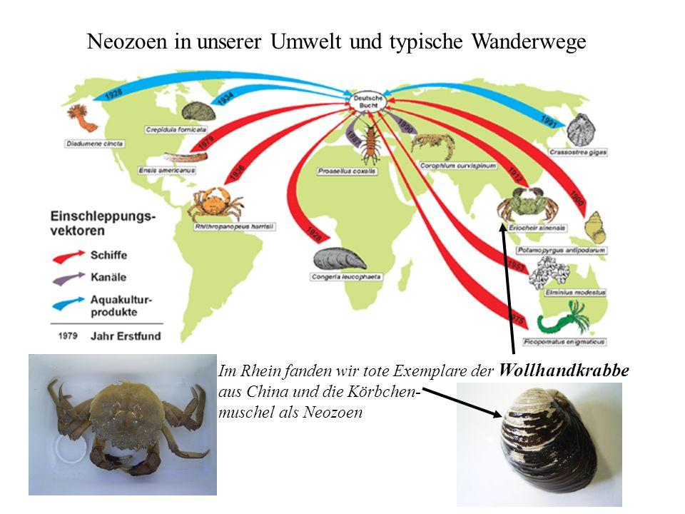 Neozoen in unserer Umwelt und typische Wanderwege