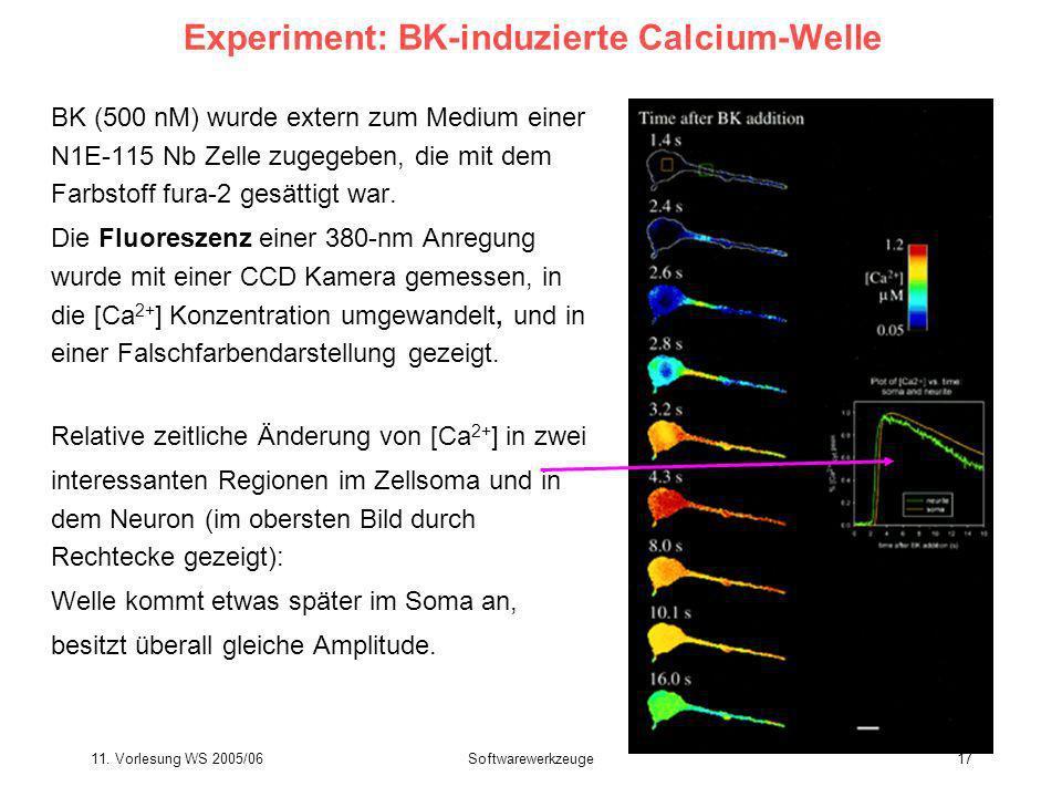 Experiment: BK-induzierte Calcium-Welle