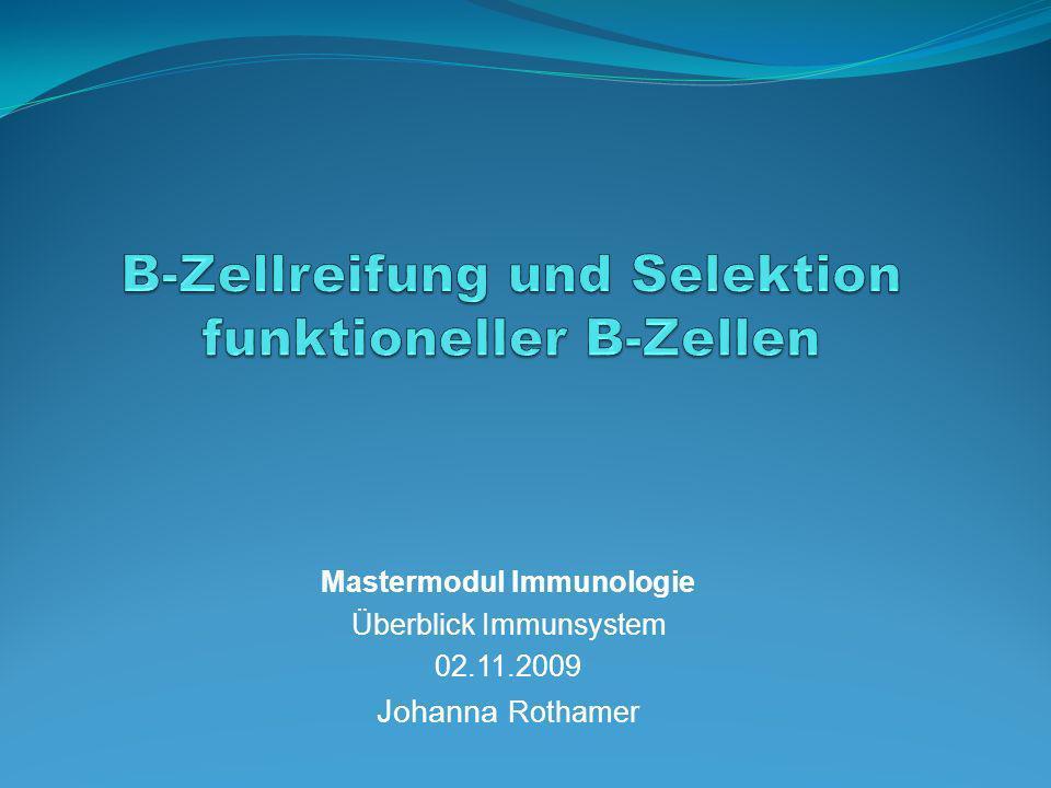 B-Zellreifung und Selektion funktioneller B-Zellen