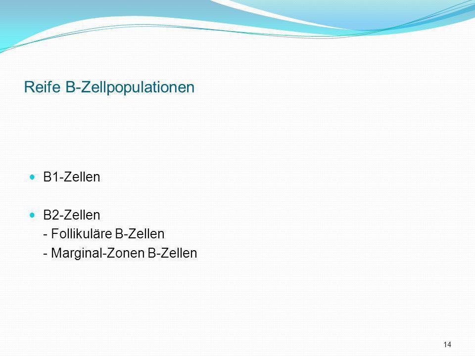 Reife B-Zellpopulationen
