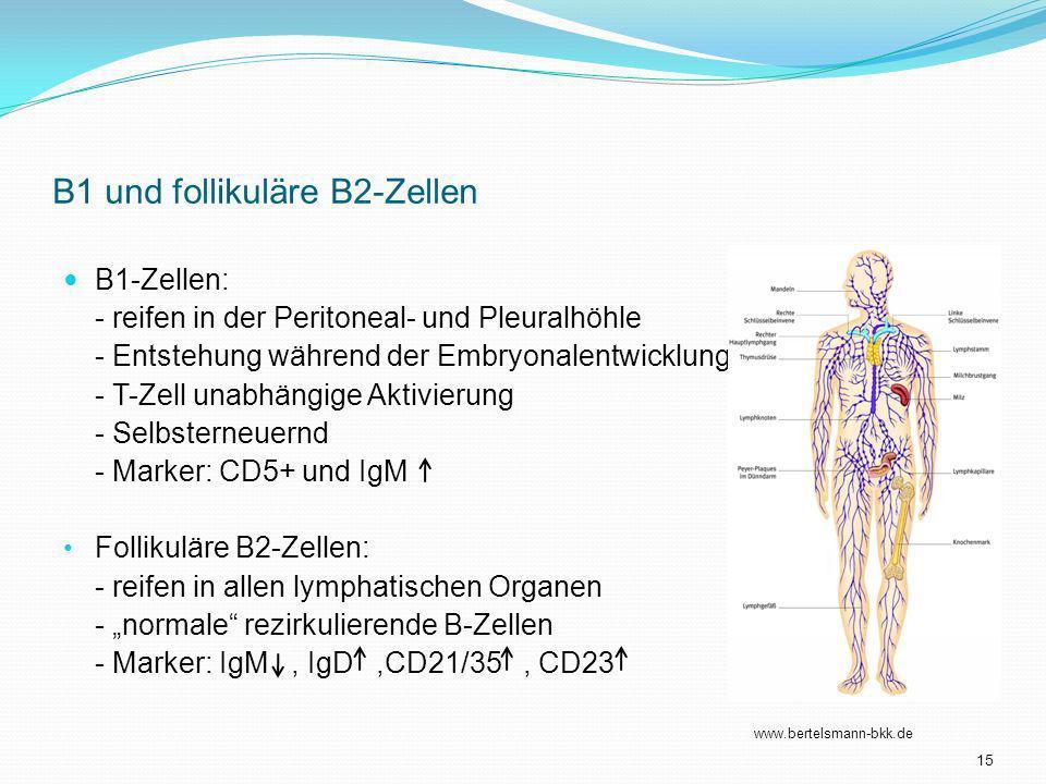 B1 und follikuläre B2-Zellen