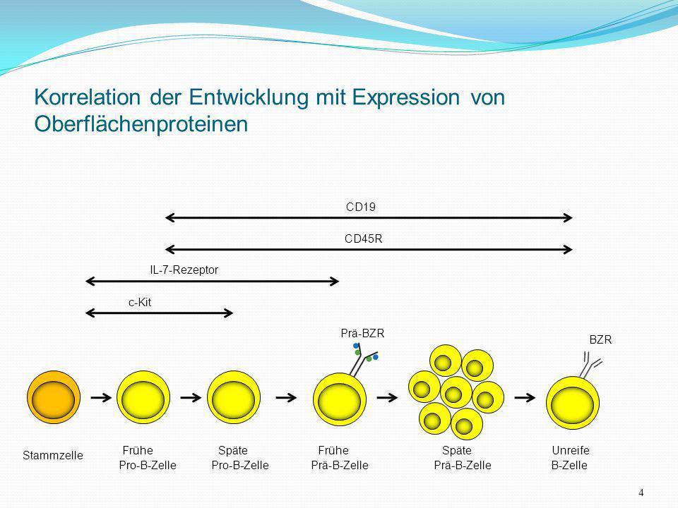 Korrelation der Entwicklung mit Expression von Oberflächenproteinen