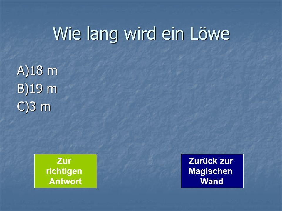 Wie lang wird ein Löwe A)18 m B)19 m C)3 m Zur richtigen Antwort