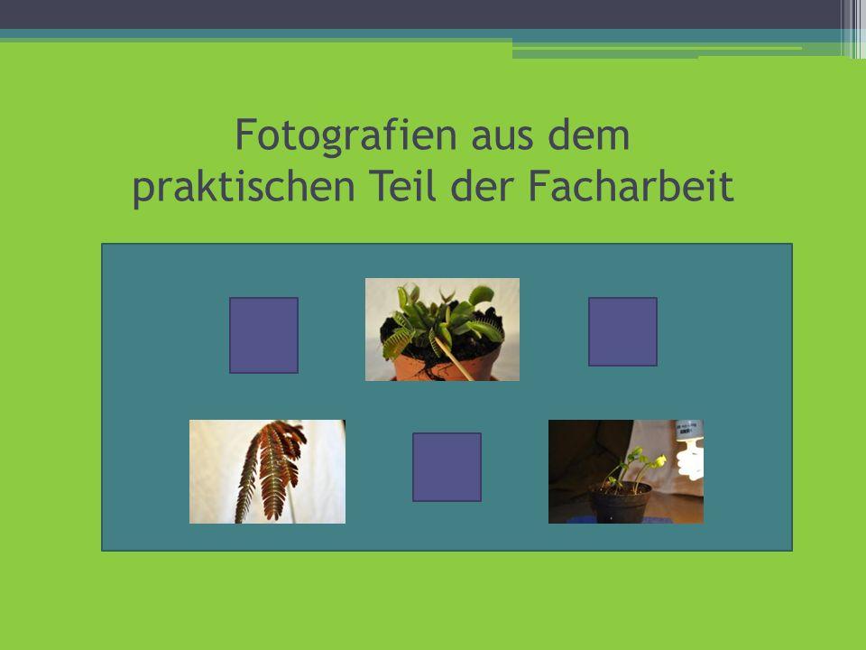 Fotografien aus dem praktischen Teil der Facharbeit