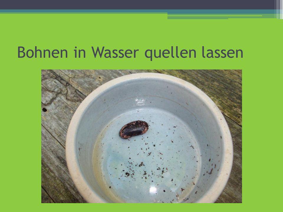 Bohnen in Wasser quellen lassen