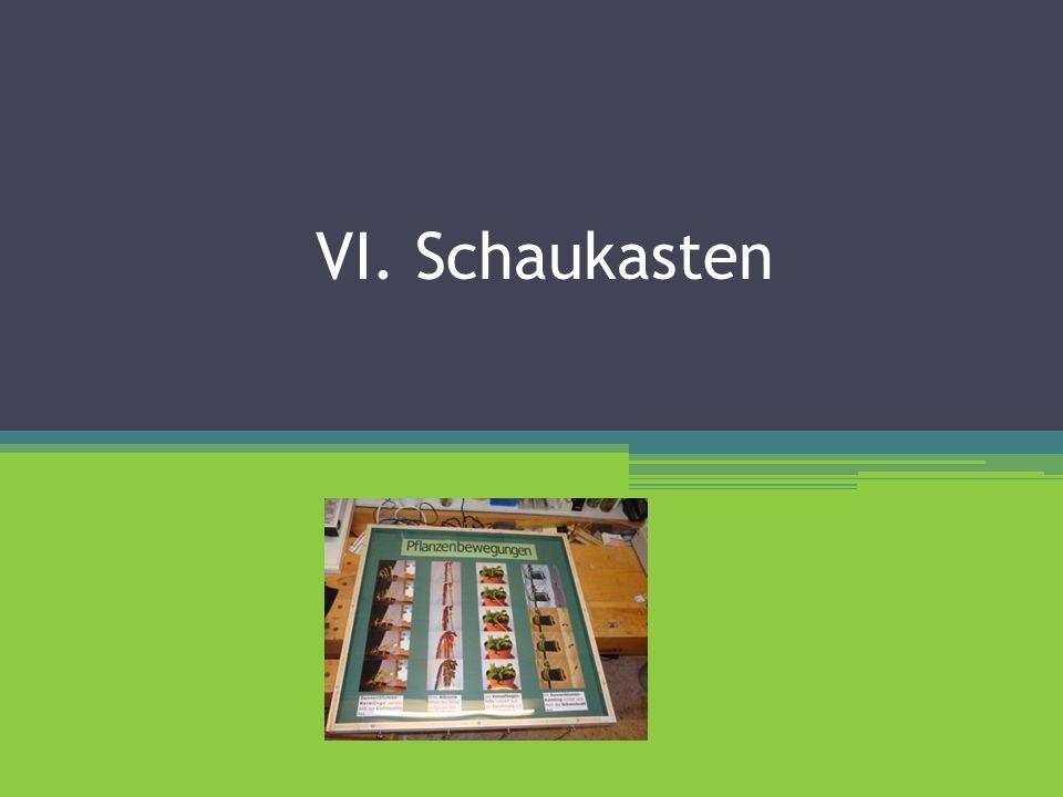 VI. Schaukasten