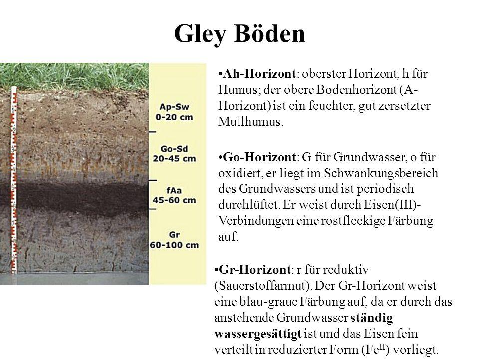 Gley BödenAh-Horizont: oberster Horizont, h für Humus; der obere Bodenhorizont (A-Horizont) ist ein feuchter, gut zersetzter Mullhumus.