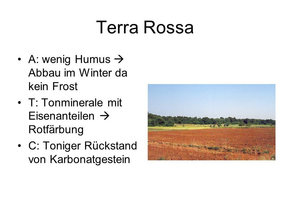 Terra Rossa A: wenig Humus  Abbau im Winter da kein Frost