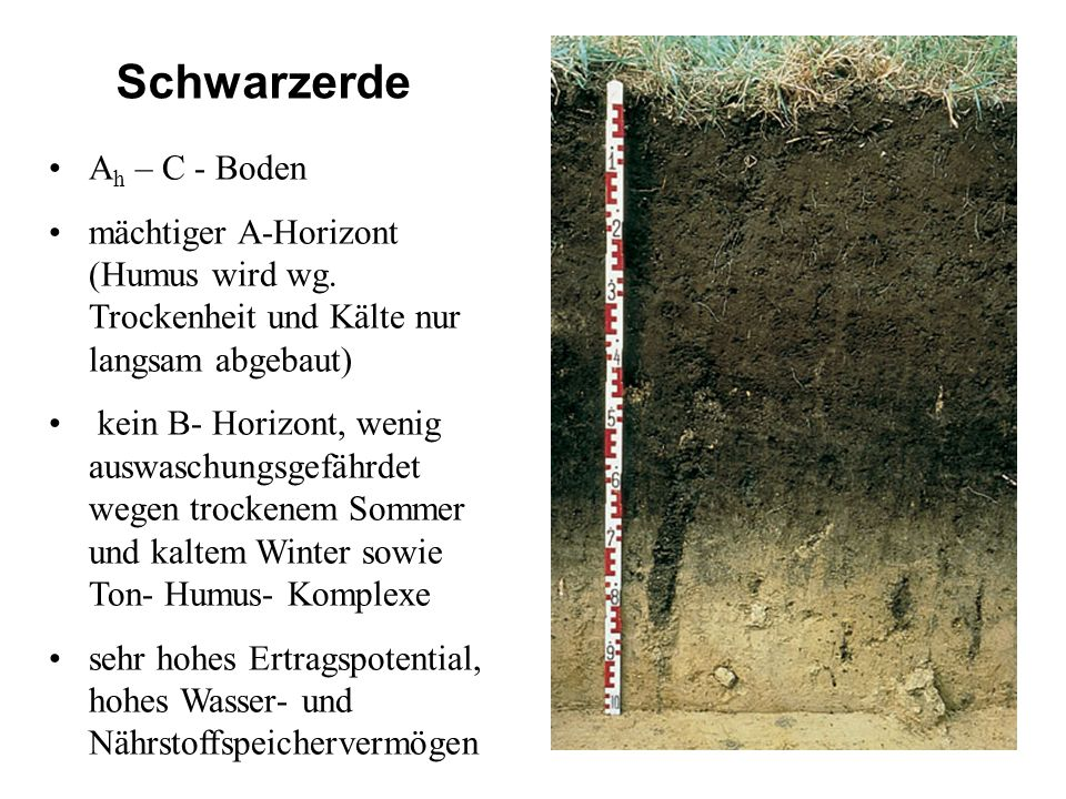 Schwarzerde Ah – C - Boden