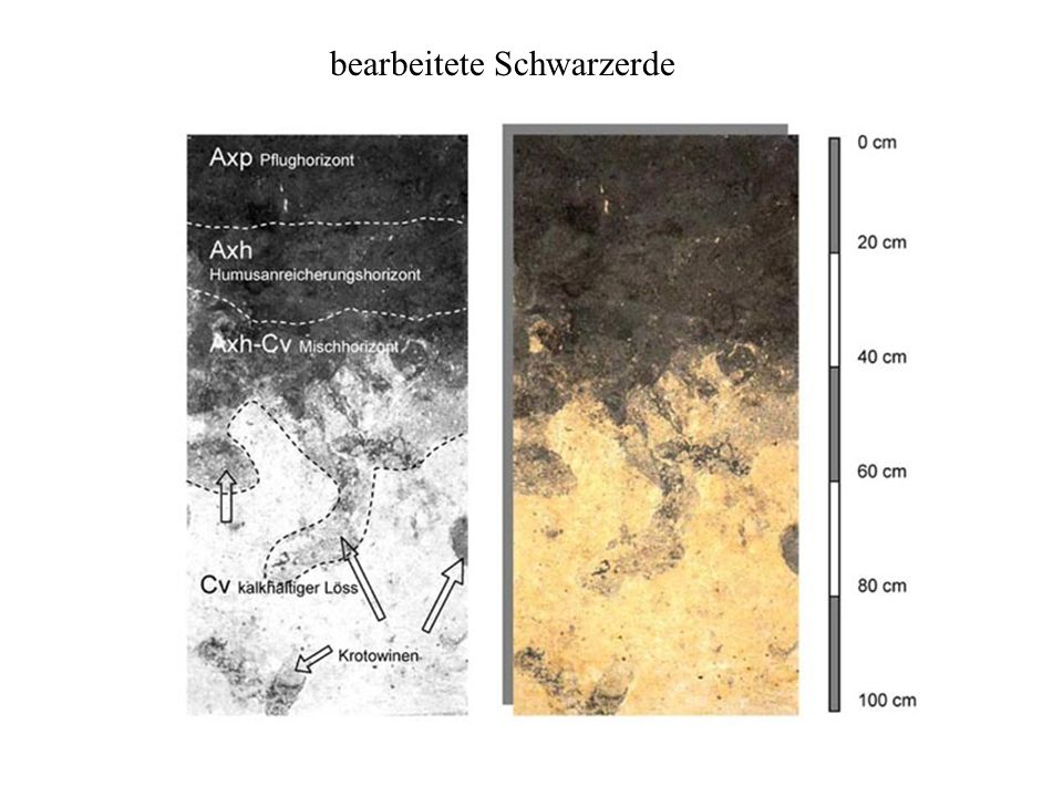 bearbeitete Schwarzerde