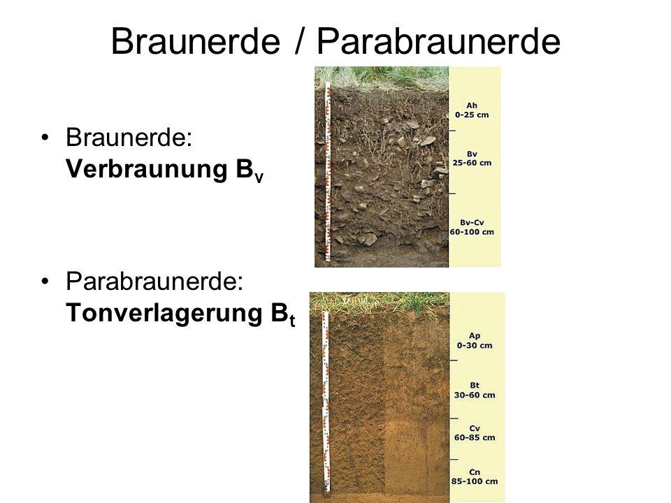 Braunerde / Parabraunerde