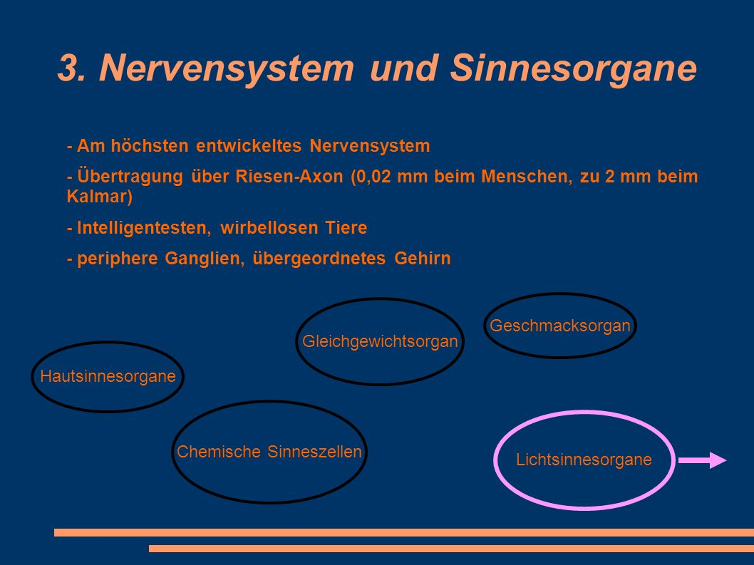 3. Nervensystem und Sinnesorgane