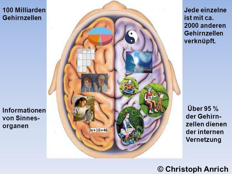 © Christoph Anrich 100 Milliarden Gehirnzellen
