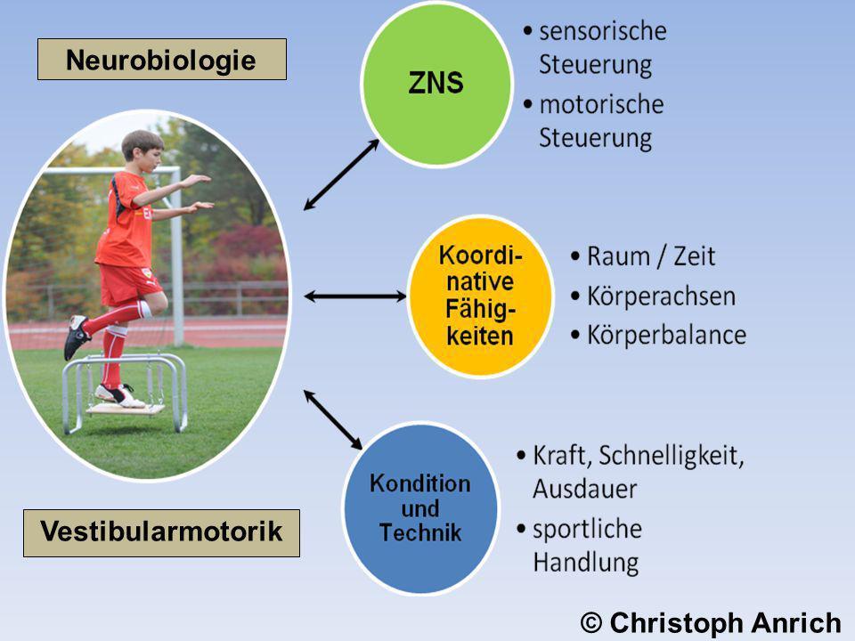 Neurobiologie Vestibularmotorik © Christoph Anrich