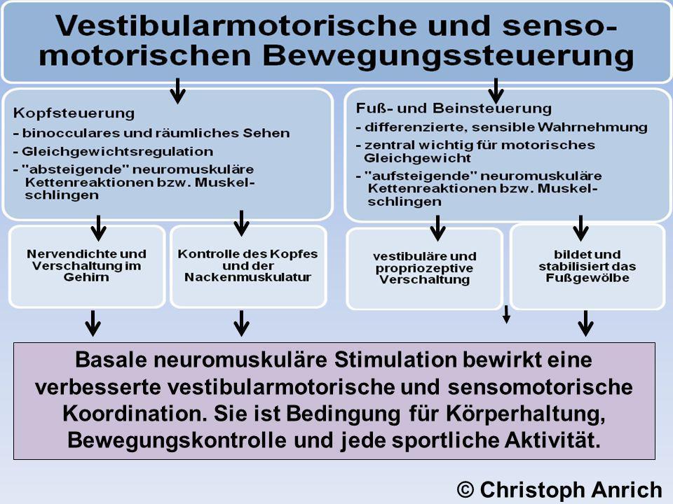 Basale neuromuskuläre Stimulation bewirkt eine verbesserte vestibularmotorische und sensomotorische Koordination. Sie ist Bedingung für Körperhaltung, Bewegungskontrolle und jede sportliche Aktivität.