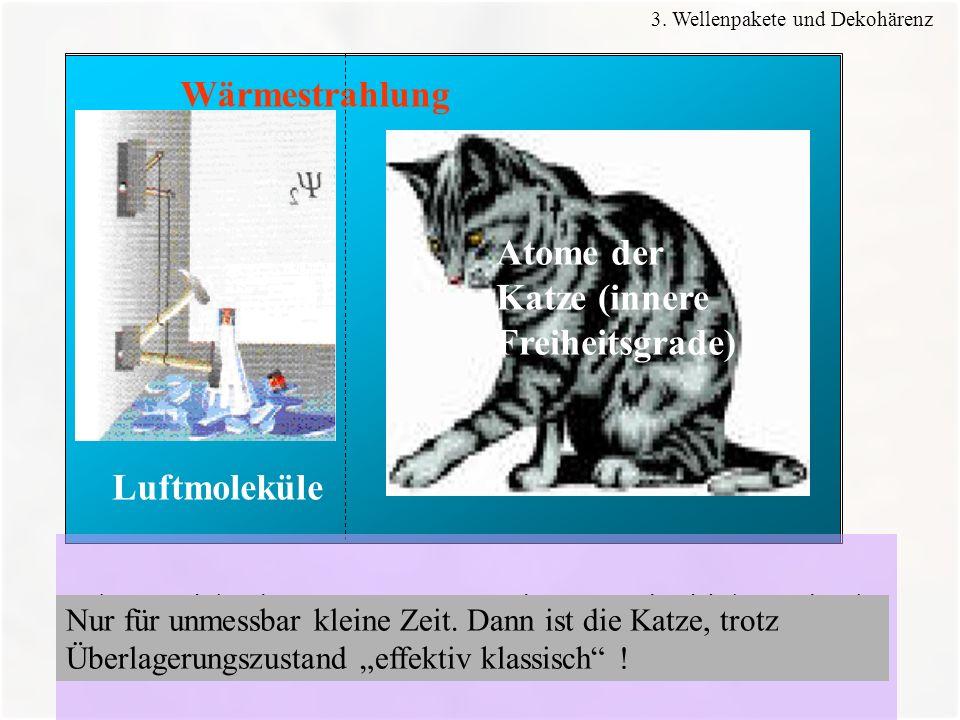 Atome der Katze (innere Freiheitsgrade)