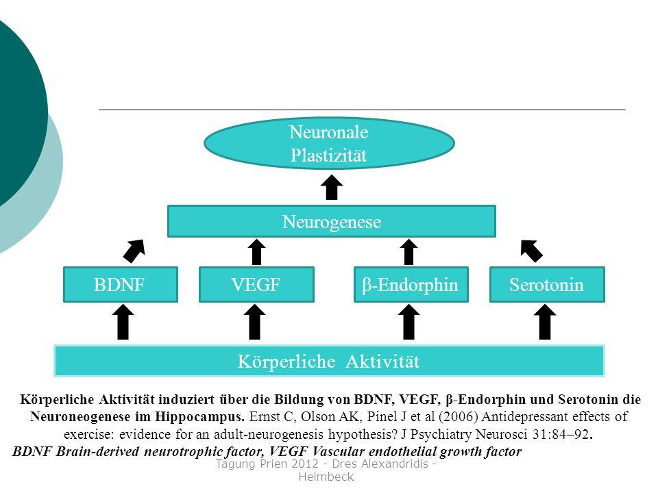Körperliche Aktivität VEGF BDNF β-Endorphin Serotonin Neurogenese