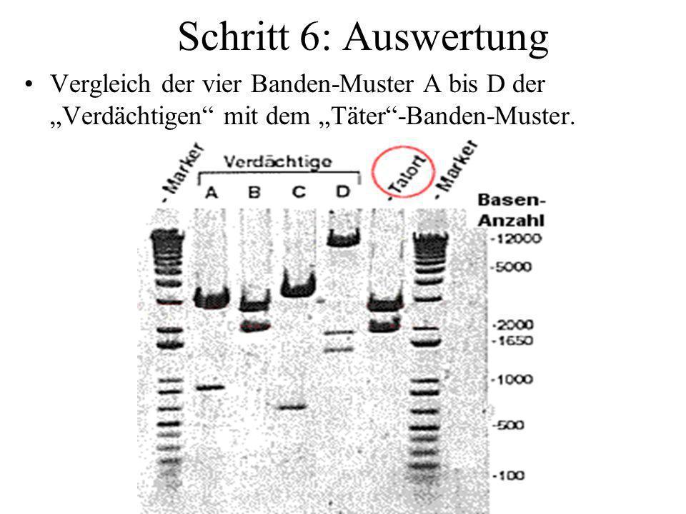 """Schritt 6: Auswertung Vergleich der vier Banden-Muster A bis D der """"Verdächtigen mit dem """"Täter -Banden-Muster."""