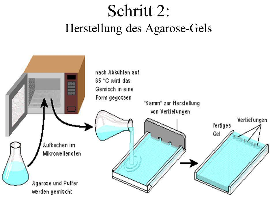 Schritt 2: Herstellung des Agarose-Gels