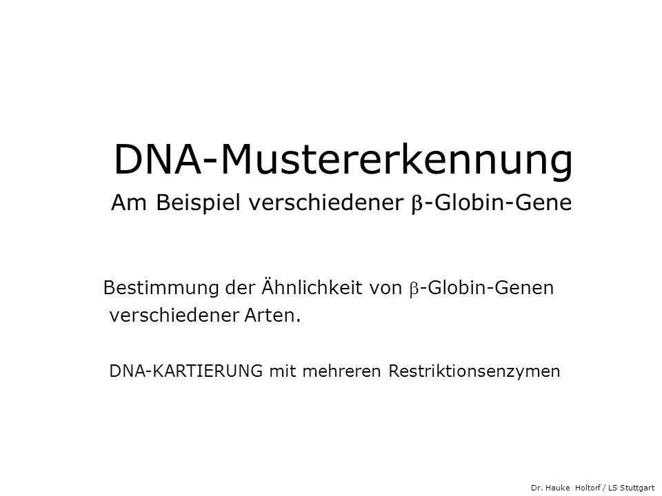 DNA-Mustererkennung Am Beispiel verschiedener b-Globin-Gene