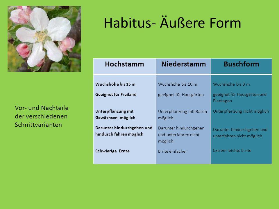 Habitus- Äußere Form Hochstamm Niederstamm Buschform