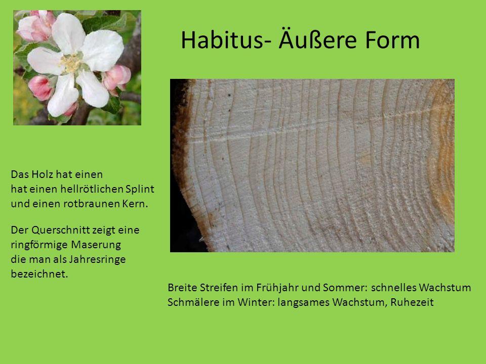 Habitus- Äußere Form Das Holz hat einen hat einen hellrötlichen Splint