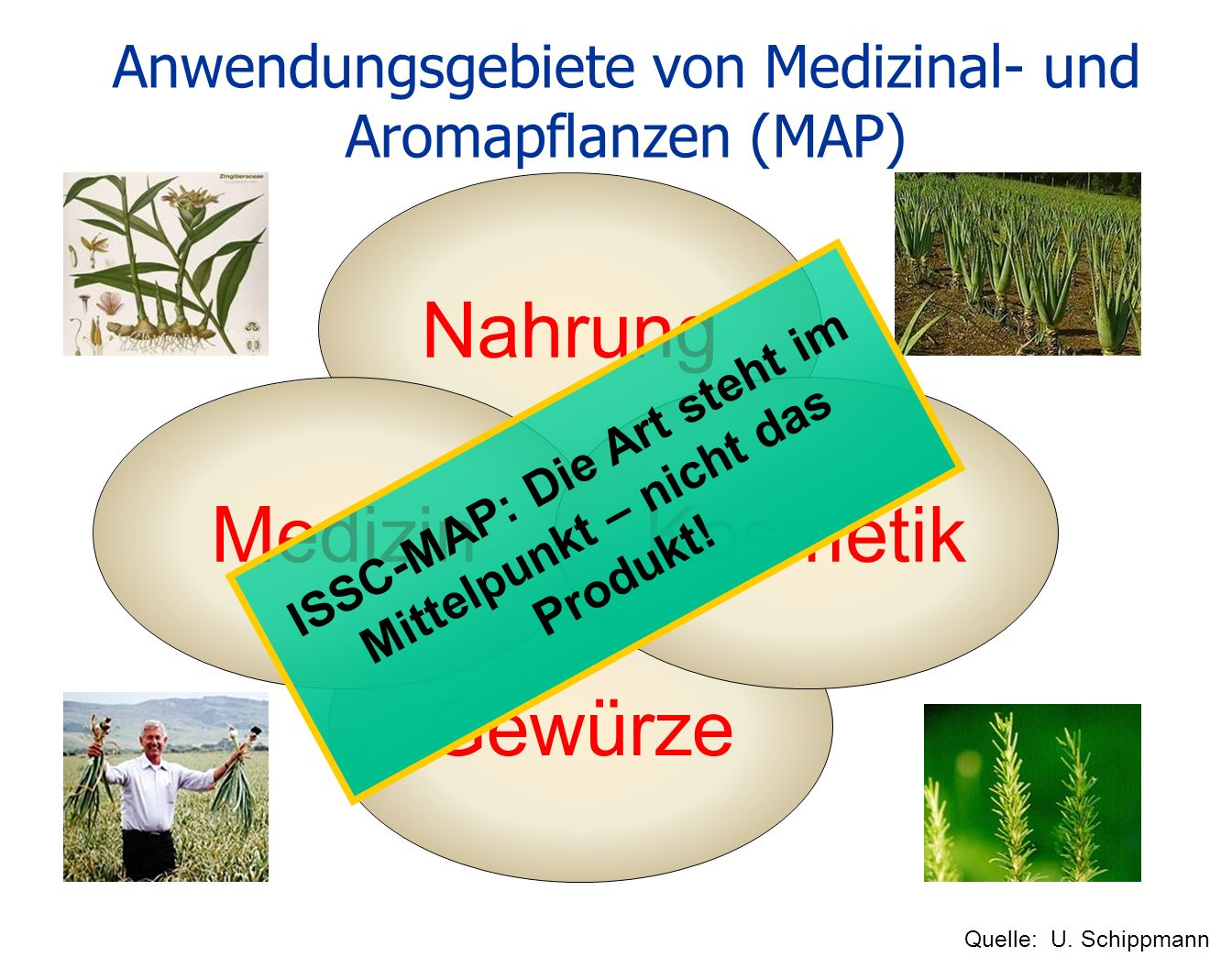 Anwendungsgebiete von Medizinal- und Aromapflanzen (MAP)