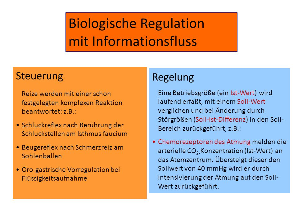 Biologische Regulation mit Informationsfluss
