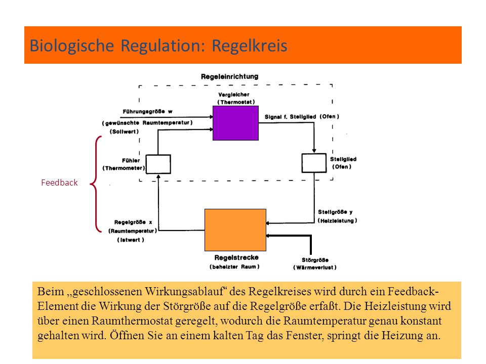 Biologische Regulation: Regelkreis