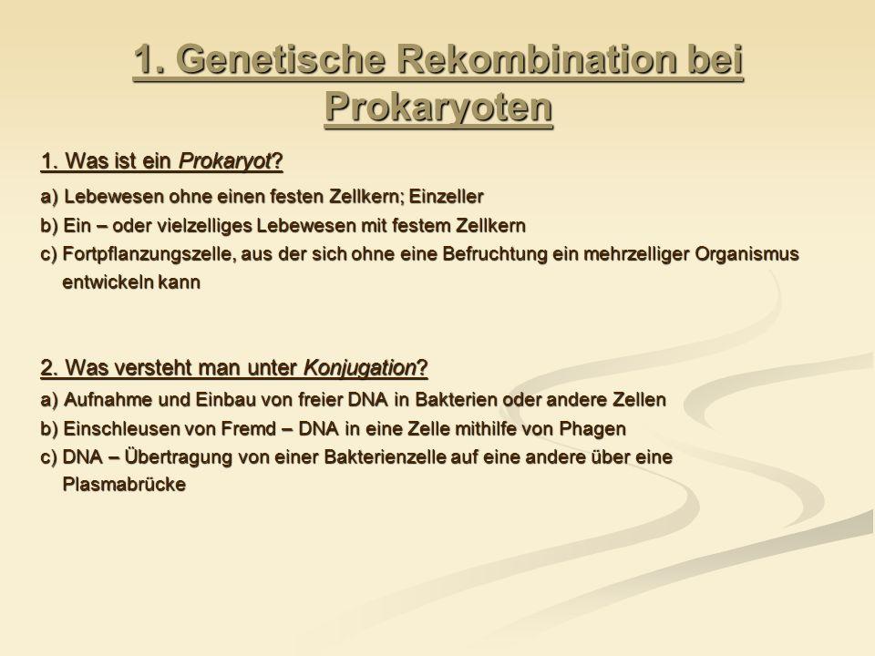 1. Genetische Rekombination bei Prokaryoten
