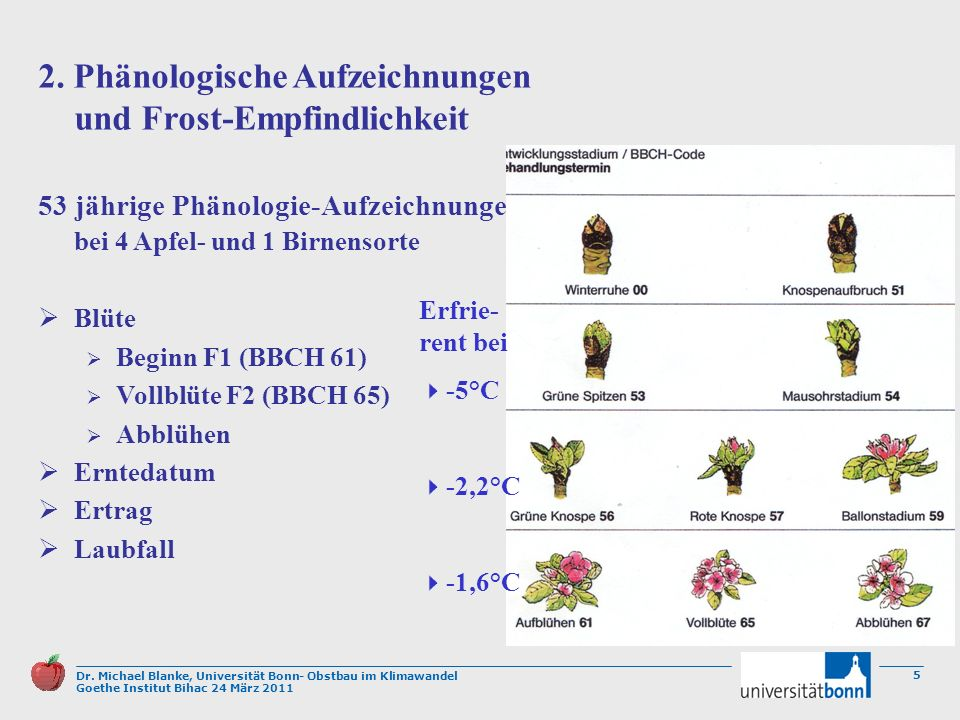 2. Phänologische Aufzeichnungen und Frost-Empfindlichkeit