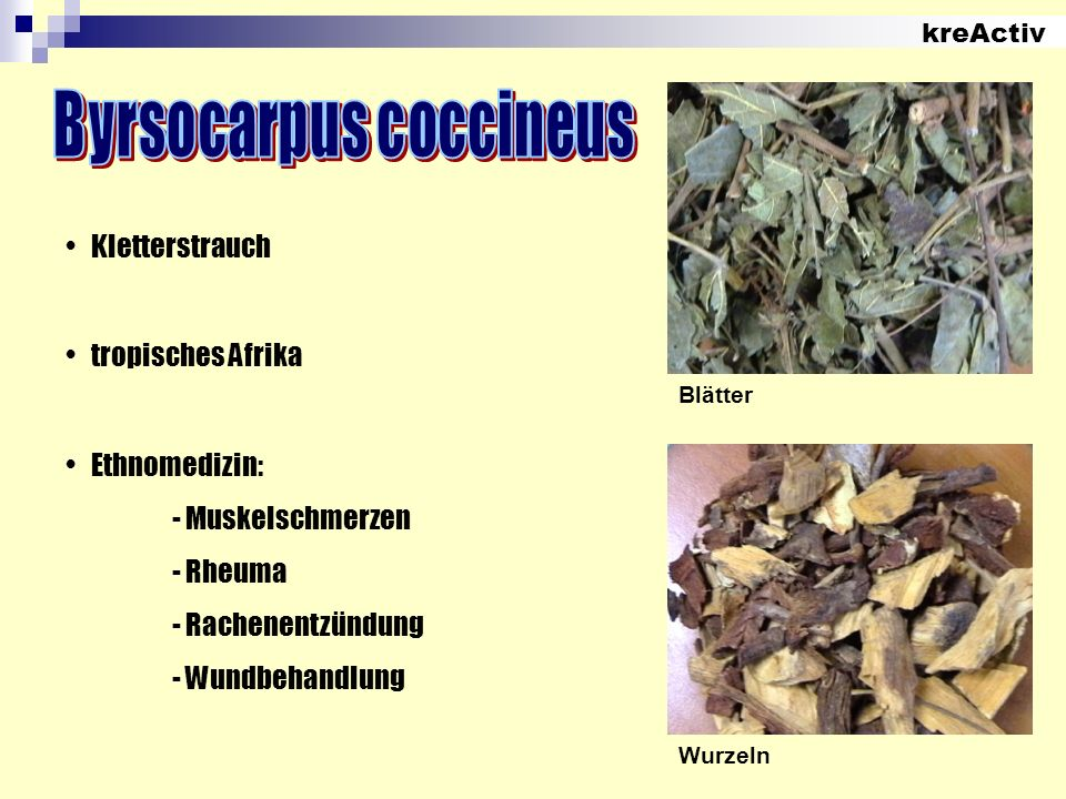 Byrsocarpus coccineus