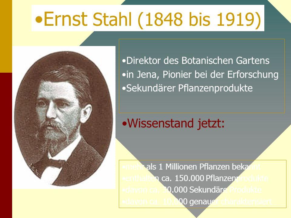 Ernst Stahl (1848 bis 1919) Wissenstand jetzt: