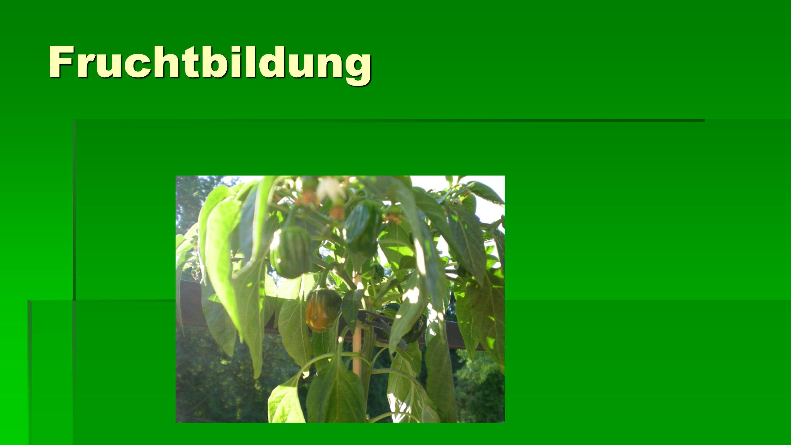 Fruchtbildung