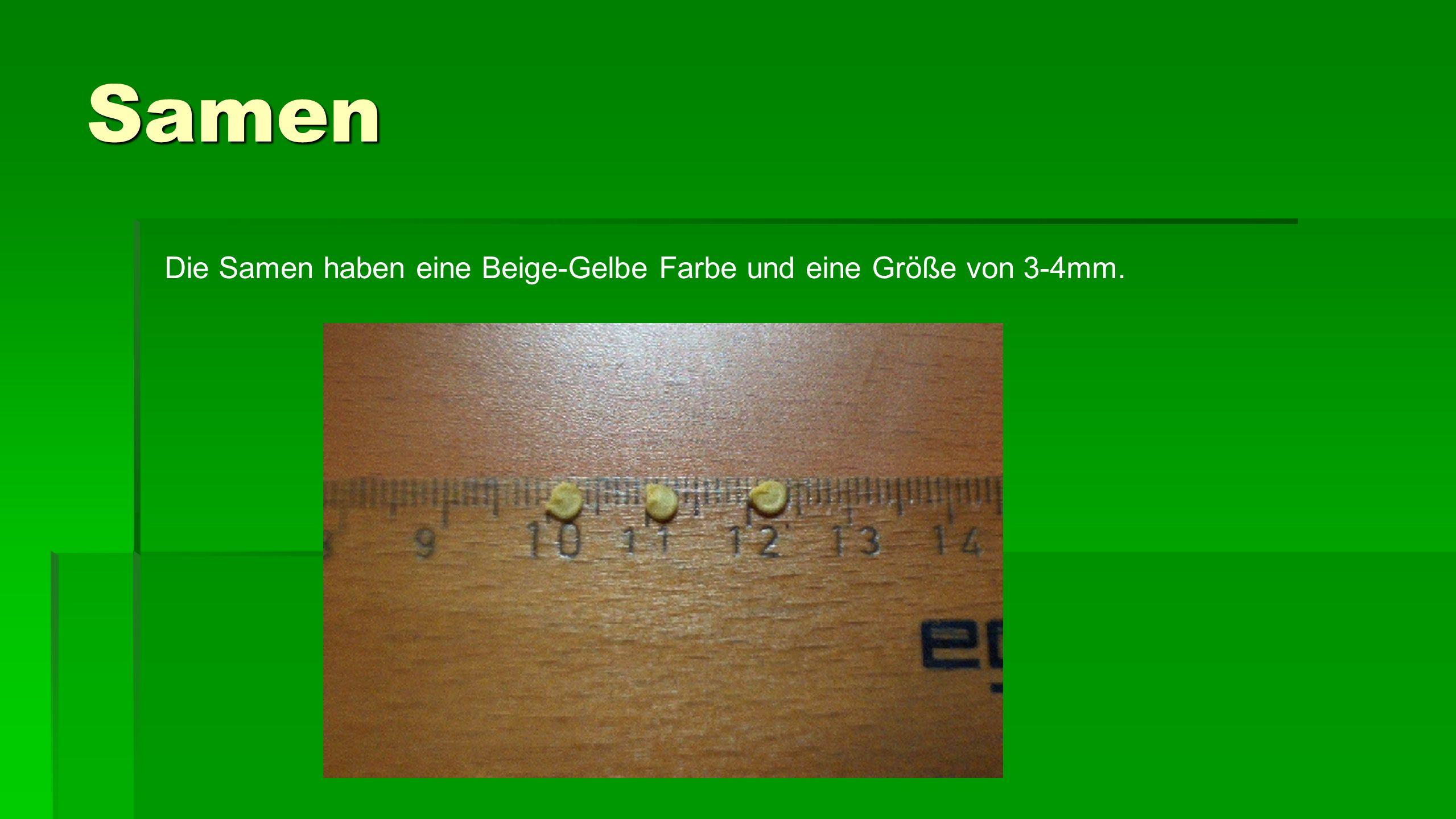Samen Die Samen haben eine Beige-Gelbe Farbe und eine Größe von 3-4mm.
