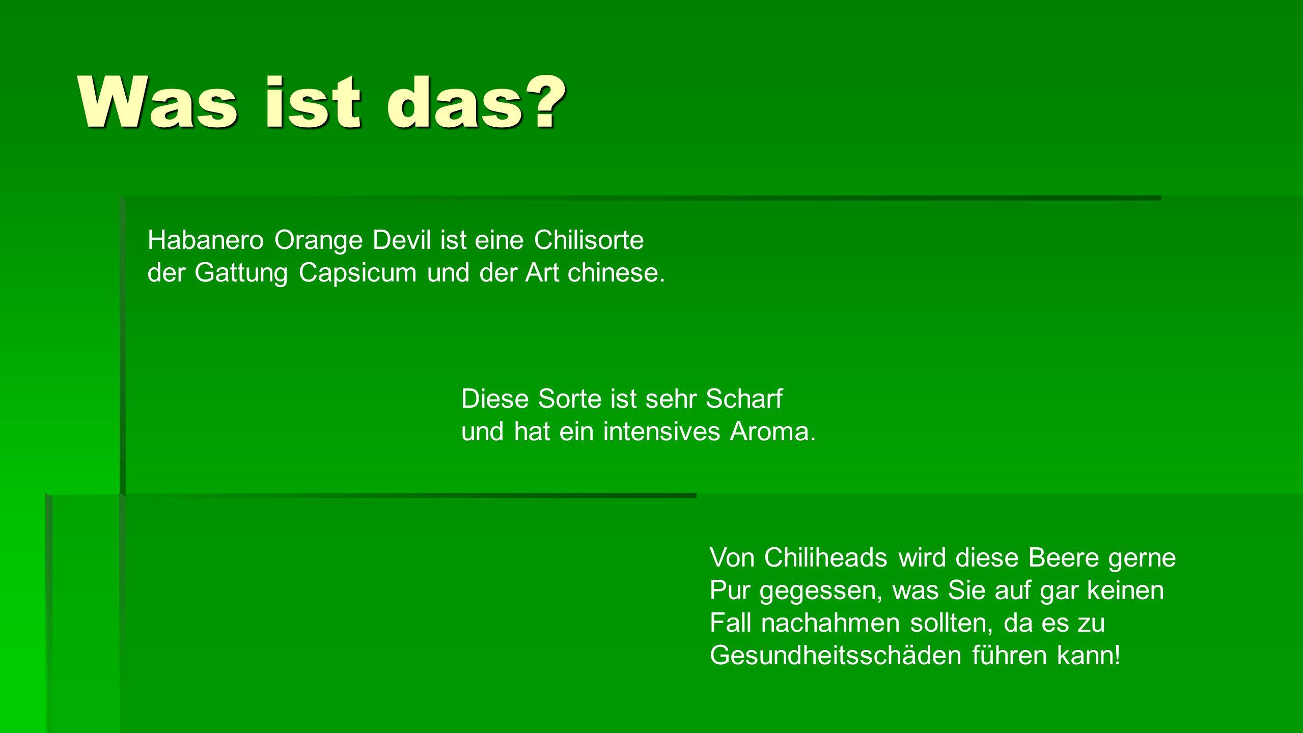 Was ist das Habanero Orange Devil ist eine Chilisorte der Gattung Capsicum und der Art chinese.