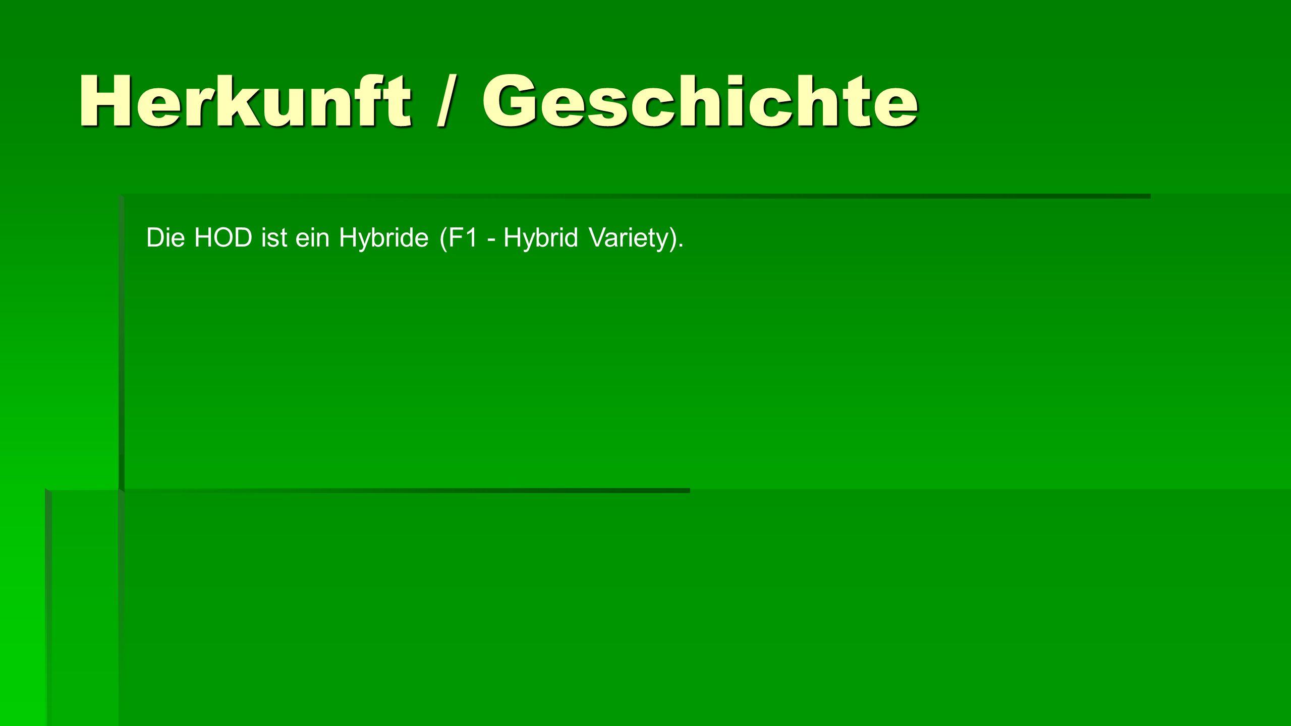 Herkunft / Geschichte Die HOD ist ein Hybride (F1 - Hybrid Variety).