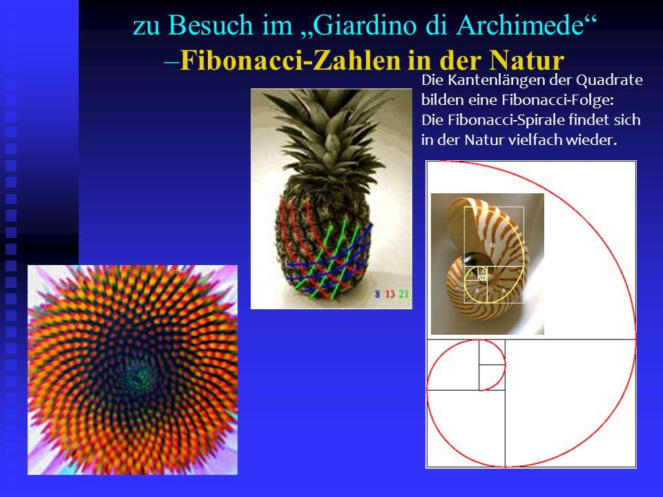 """zu Besuch im """"Giardino di Archimede –Fibonacci-Zahlen in der Natur"""