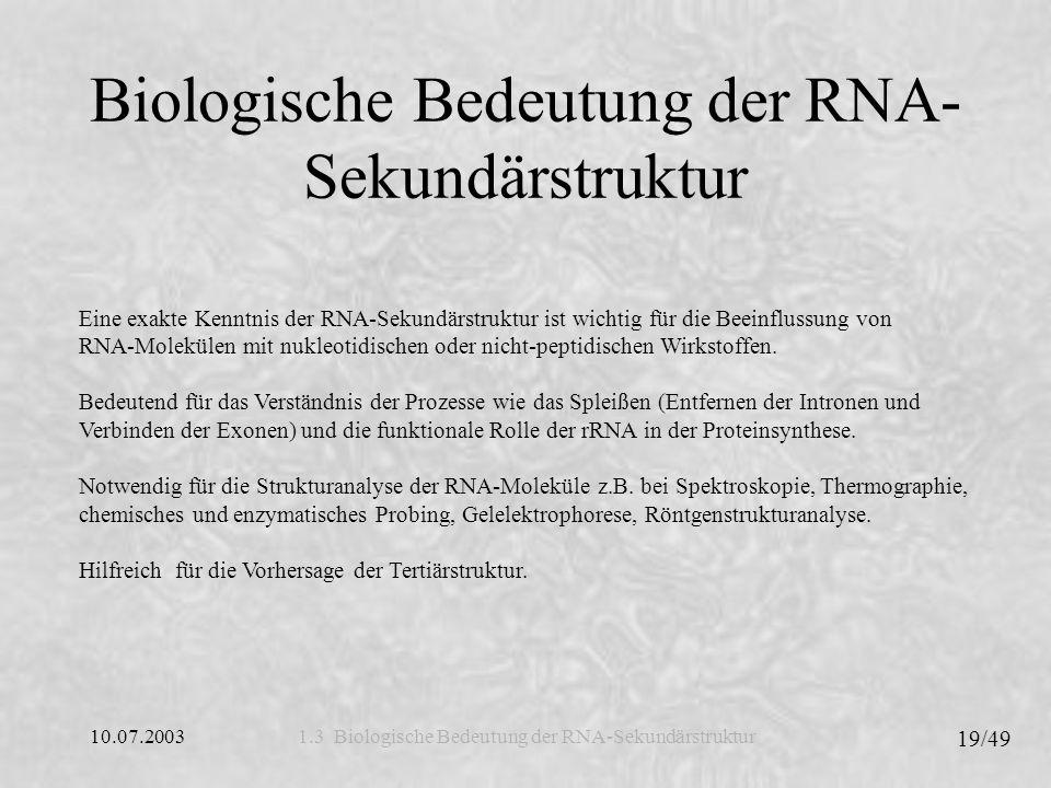 Biologische Bedeutung der RNA-Sekundärstruktur