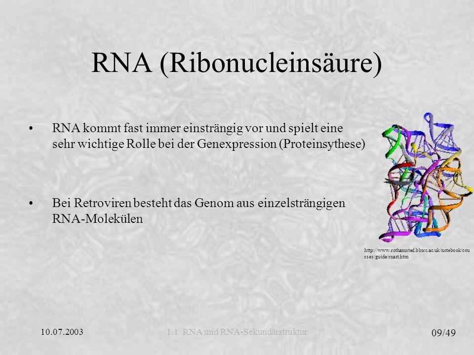 RNA (Ribonucleinsäure)