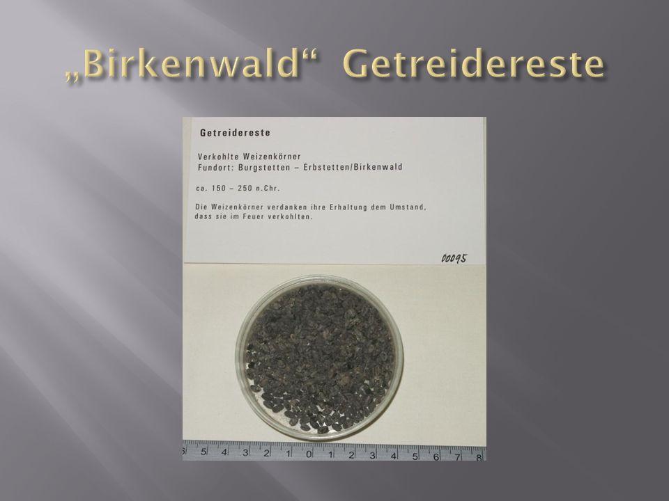 """""""Birkenwald Getreidereste"""