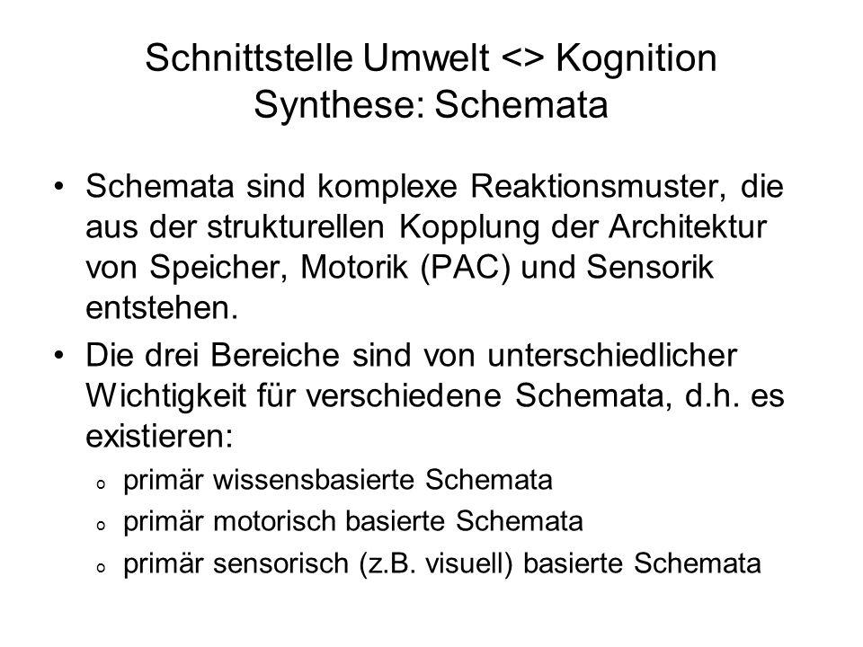 Schnittstelle Umwelt <> Kognition Synthese: Schemata