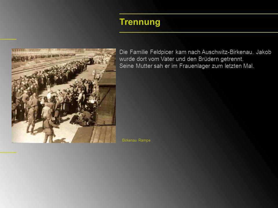 TrennungDie Familie Feldpicer kam nach Auschwitz-Birkenau. Jakob wurde dort vom Vater und den Brüdern getrennt.