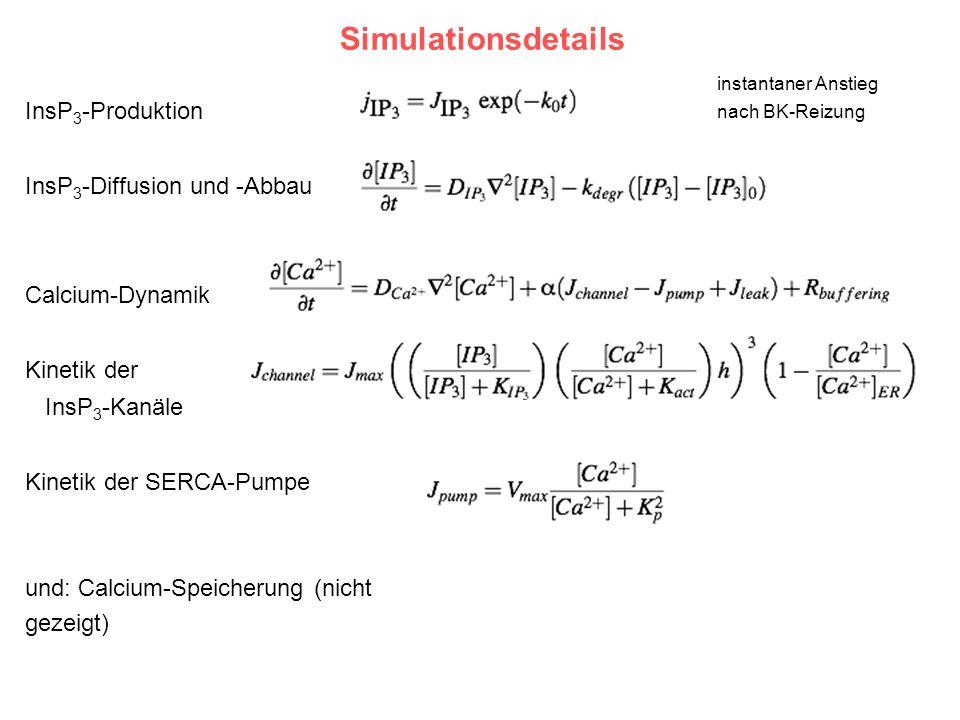 Simulationsdetails InsP3-Produktion InsP3-Diffusion und -Abbau