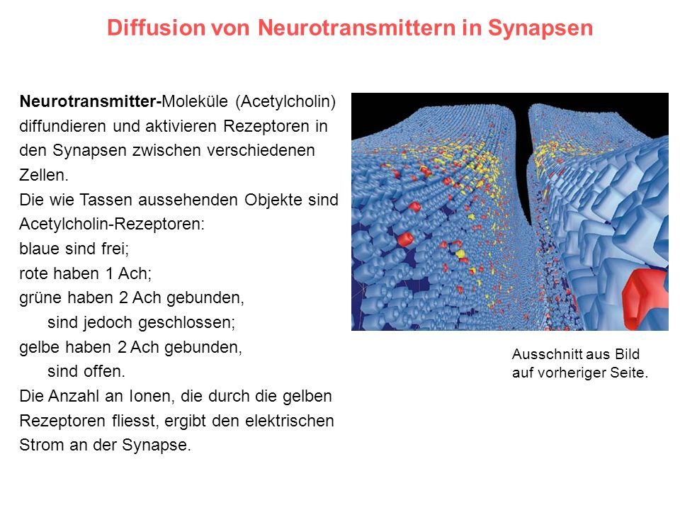 Diffusion von Neurotransmittern in Synapsen