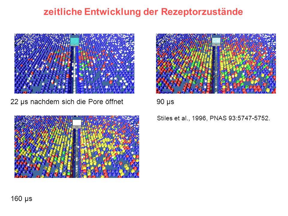 zeitliche Entwicklung der Rezeptorzustände