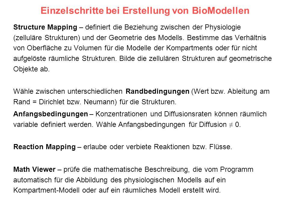 Einzelschritte bei Erstellung von BioModellen